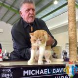 Michael David Woods asal Australia saat menilai salah satu kategori kucing di hall Jatim Park 2, Minggu (14/10/2018). (Foto: Irsya Richa/BatuTIMES)