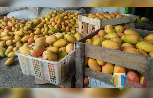 Mangga hasil panen para petani di Kecamatan Banyakan. (foto: Eko Arif S/ JatimTIMES)
