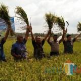 Kesuburan Tanah Kian Memprihatinkan, Pemkab Galakkan 'Sumpah' Tanaman Sehat