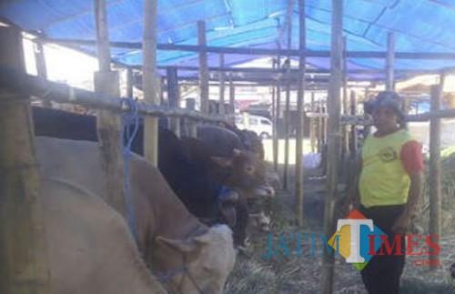 Peternak sapi di salah satu wilayah dan sentra sapi di Kabupaten Malang (Dok MalangTIMES)