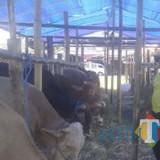 Pertanian Ada Subsidi Pupuk, Peternak : Kita  Tidak Ada Itu