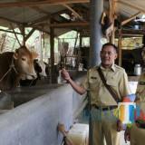 """Susu """"Mlorot"""" di Bawah Ideal,  Wabup Malang: Butuh Sentuhan Berbeda"""