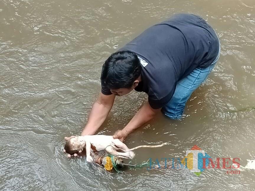 Kondisi saat jasad bayi laki-laki yang ditemukan Syafak dievakuasi dari Sungai Pecari, Genteng Kulon