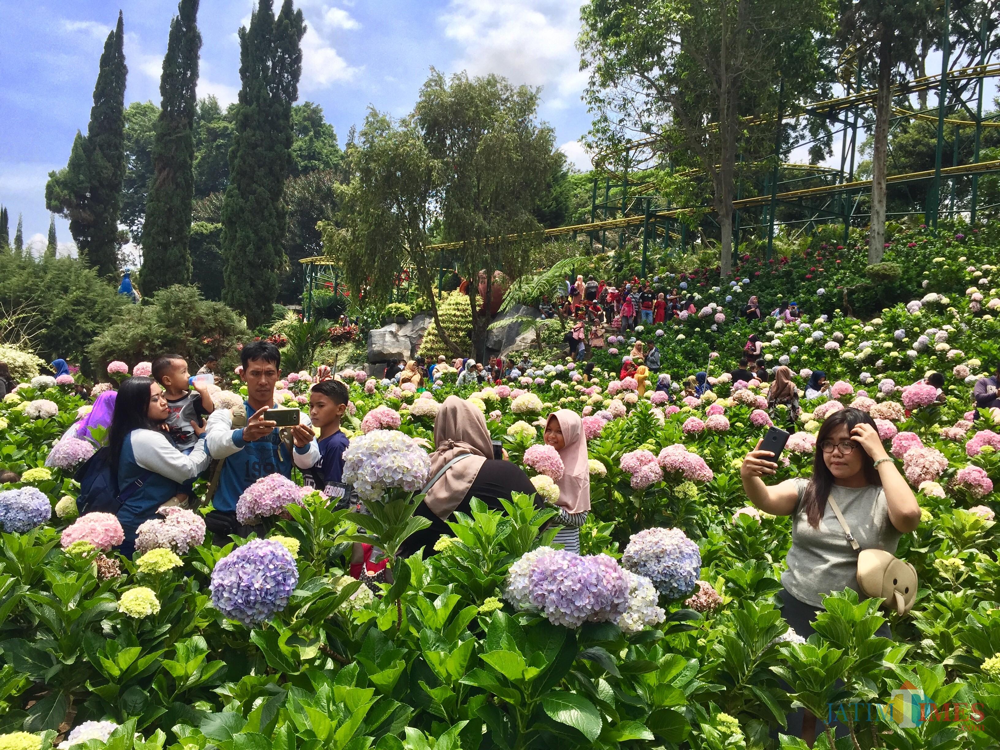 Para wisatawan yang sedang swafoto di area taman bungan Selecta, Minggu (11/11/2018). (Foto: Irsya Richa/MalangTIMES)