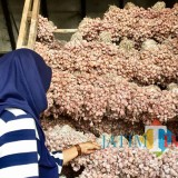 Salah satu pegawai saat menata bibit di pasar unit sayur Jl Dewi Sartiak Kelurahan Temas Kecamatan Batu. (Foto: Irsya Richa/MalangTIMES)