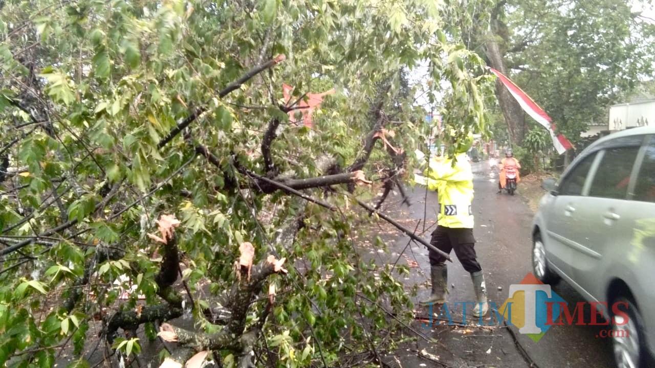 Kondisi pohon tumbang di Jl Ir Soekarno. (Foto: istimewa)
