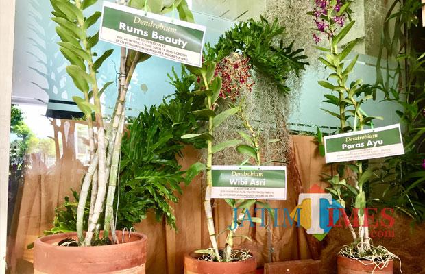 Tiga varietas anggrek dendrobium baru terpajang di Batu Shining Orchid Week di Graha Pancasila Balai Kota Among Tani, Senin (19/11/2018). (Foto: Irsya Richa/MalangTIMES)