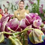 Wali Kota Batu Dewanti Rumpoko saat meninjau stan BatuShining Orchid Week di Graha Pancasila Balai Kota Among Tani, Senin (19/11/2018). (Foto: Irsya Richa/MalangTIMES)