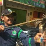 Lakukan Operasi Paku, Polisi Taman Amankan Ribuan Paku dari Pohon