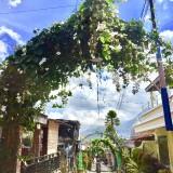 Pergola di sepanjang jalan RW 02 Dusun Jemoyo Desa Sidomulyo Kecamatan Batu Kota Batu. (Foto: Irsya Richa/MalangTIMES)