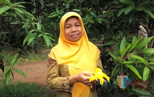 Peneliti kebun percobaan Cukurgondang menunjukkan mangga pisang.