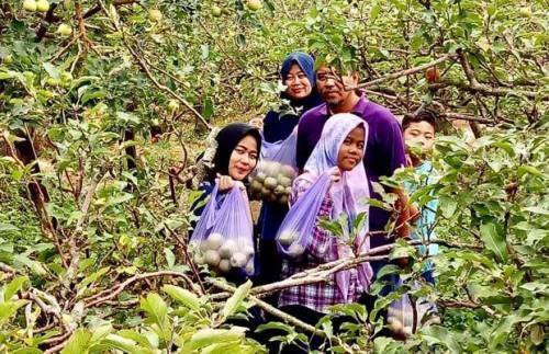 Wisatawan saat petik apel di Desa Tulungrejo Kecamatan Bumiaji. (Foto: istimewa)