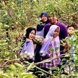 Serunya Wisata Petik Apel di Kota Batu, Belajar Sambil Makan Sepuasnya