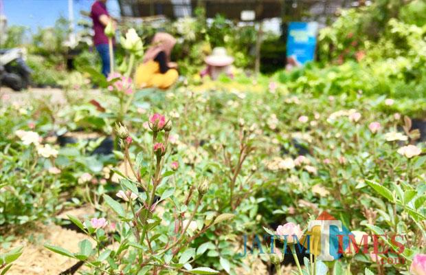 Salah satu penjual bunga menjajakan tanamannya di Pasar Sekar Mulyo, Desa Sidomulyo, Kecamatan Batu. (Foto: Irsya Richa/MalangTIMES)