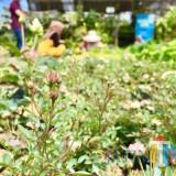 Cari Buah Tangan Bunga, Ini Beberapa Destinasinya di Desa Sidomulyo