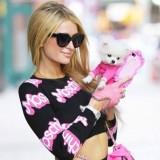 artis Paris Hilton bersama anjing jenis Chihuahua.