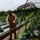 Mini-Agrowisata yang ada di Jalan Pagesangan.
