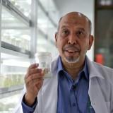Dr. Ir. Syarif Husen, M.P., menunjukan planlet hasil temuannya. (Foto: Rino Humas)