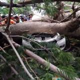 Posisi mobil xenia yang tertimpa pohon tumbang di jalur Pantura Banyuwangi-Situbondo