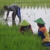 Saatnya Pemkab Malang Optimalkan Penelitian Pertanian Bukan Impor Hasil Negara Lain