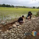 Proyek plengsengan dari Dana Desa (DD) yang di soal warga