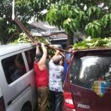 Ilustrasi pohon tumbang (Doc MalangTIMES)