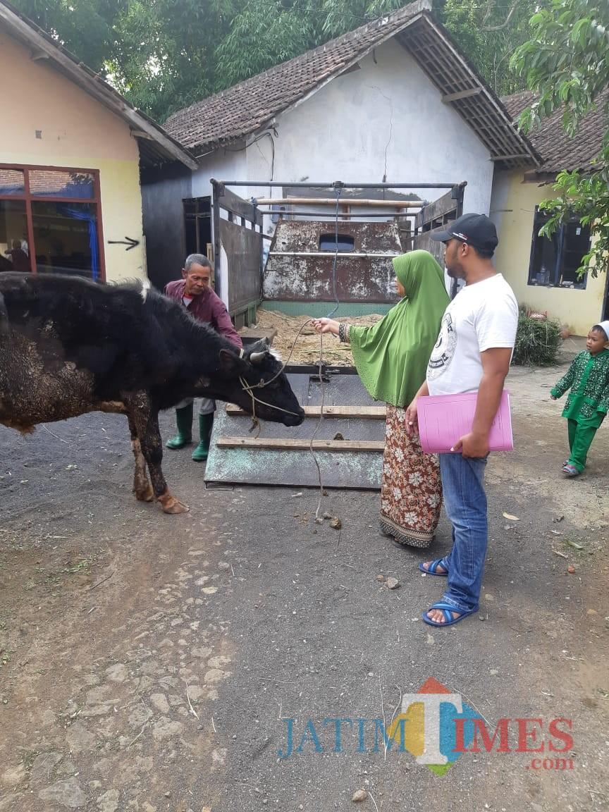 Barang bukti sapi yang dicuri oleh pelaku pencurian, Kabupaten Malang (Foto : Humas Polres Malang for MalangTIMES)