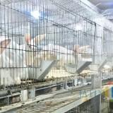 Ratusan kelinci yang berada di kandang Close House Balai Kota Among Tani. (Foto: Irsya Richa/MalangTIMES)