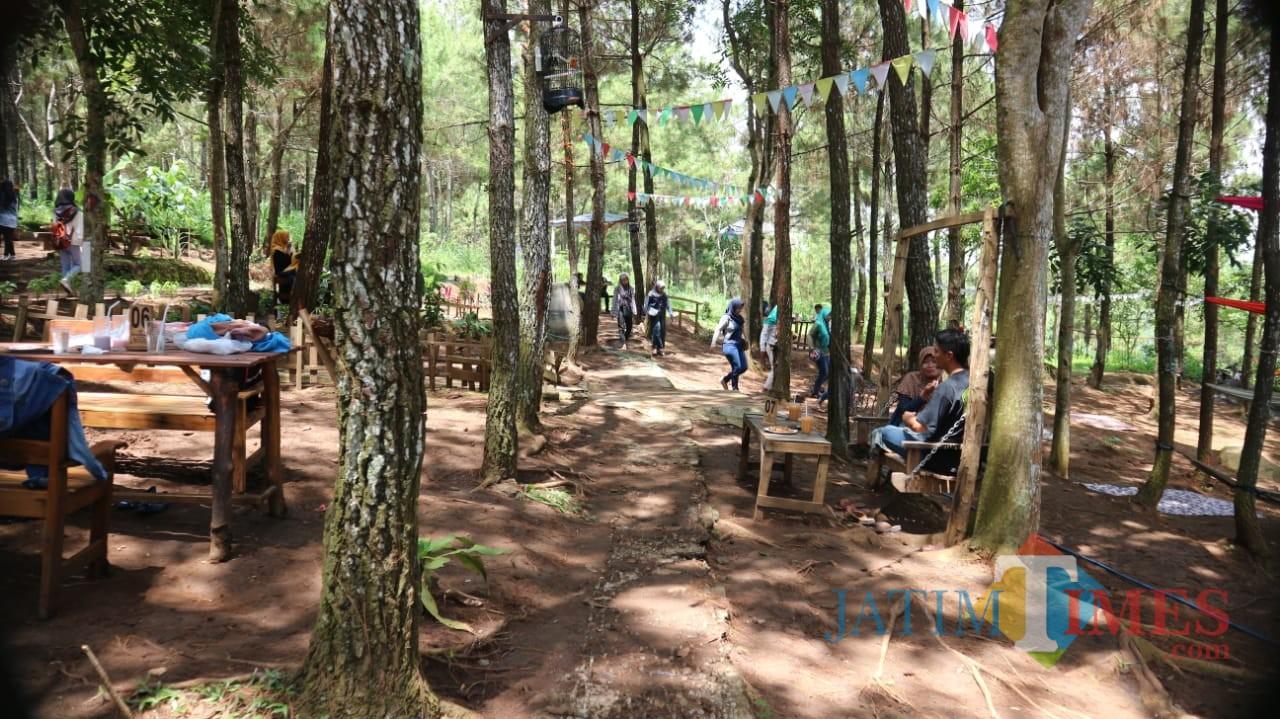 Para pengunjung kedai 66 menikmati suasana di hutan pinus (eko Arif s /JatimTimes)