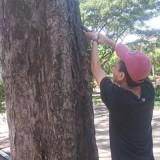 Aksi pencabutan paku di pohon oleh komunitas City Care dan Himpunan Mahasiswa Perencanaan Wilayah dan Kota ITN Malang (Istimewa).