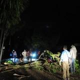 Petugas BPBD membersihkan pohon tumbang di Jl  Hasanudin Kota Batu. (foto Luqmanul Hakim)