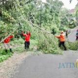 Tiga Hari Kota Batu Diterpa Hujan Campur Angin, 64 Pohon Tumbang