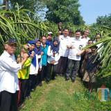 Tiga dari kanan : Budiar Kepala DTPHP Kabupaten Malang saat cek lokasi kebun buah naga yang diserang cendawan (DTPHP for MalangTIMES)