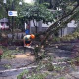 Pohon tumbang di Kota Malang (Doc MalangTIMES)
