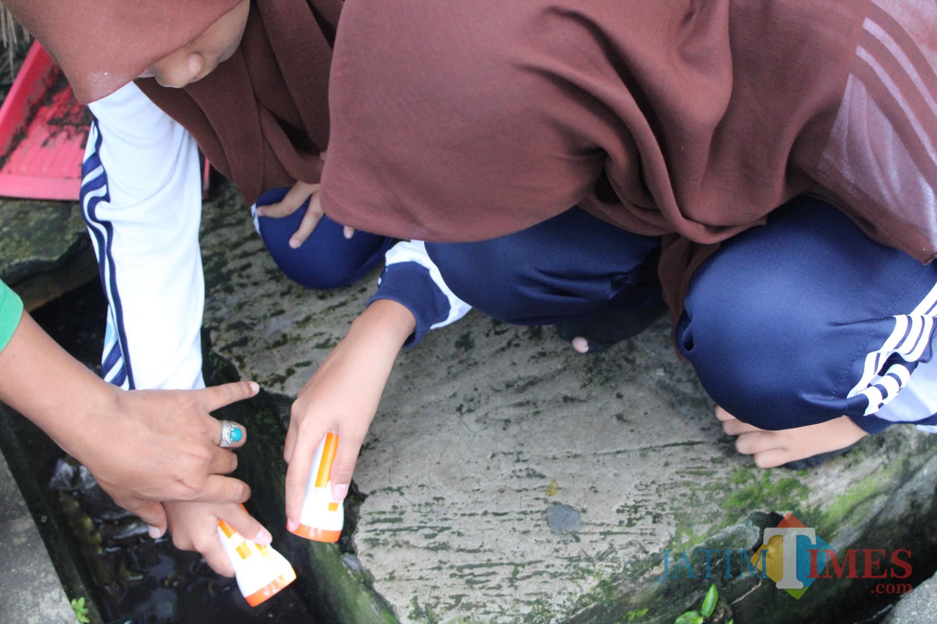 Sejumlah anggota Pokja Jubastik SMPN 2 Jombang saat memantau jentik nyamuk di selokan sekolah. (Foto : Adi Rosul / JombangTIMES)