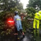 Petugas dibantu warga ketika menyingkirkan pohon tumbang di Kecamatan Pagu Kabupaten Kediri. (Foto: Ist)