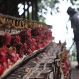 Liburan Kampus Sebabkan Harga Telur di Kota Malang Anjlok
