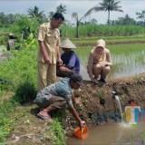 Dua Desa Siap Digelontor Bantuan Menteri Susi Pudjiastuti, Dinas Perikanan Belum Bisa Memastikan