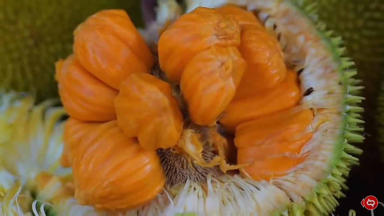 Buah keledang yang mirip buah nangka atau cimpeda ini buah khas yang langka di Kalimantan. (Ist)
