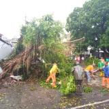 Kondisi warung yang tertimpa pohon dan korban saat mengevakuasi motornya. (Anggara Sudiongko/MalangTIMES)