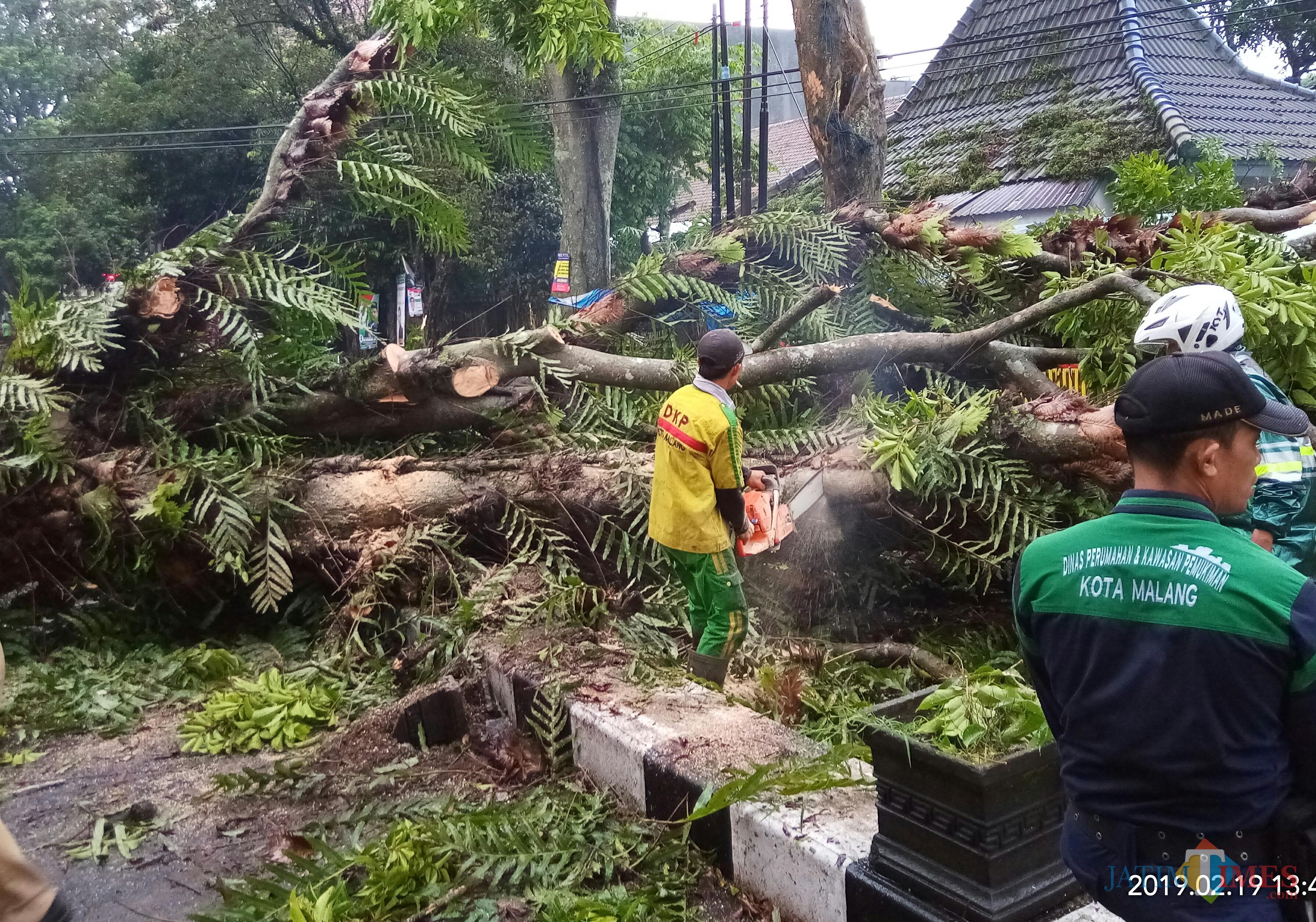Pohon yang tumbang di Jalan dr Cipto. (Anggara Sudiongko/MalangTIMES)
