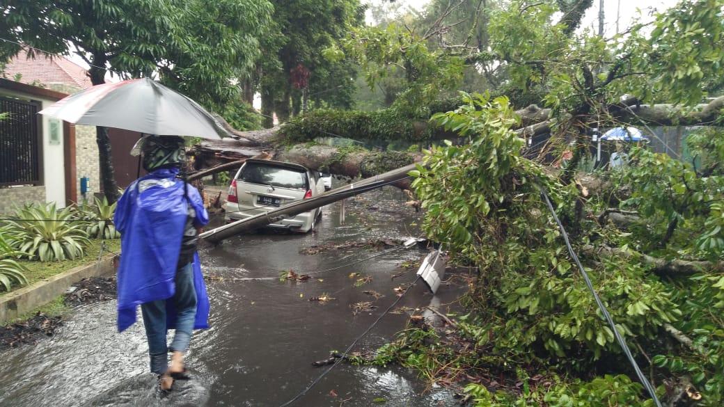 Pohon tumbang di Jl Kartini saat hujan lebat terjadi di Kota Malang. (Istimewa)