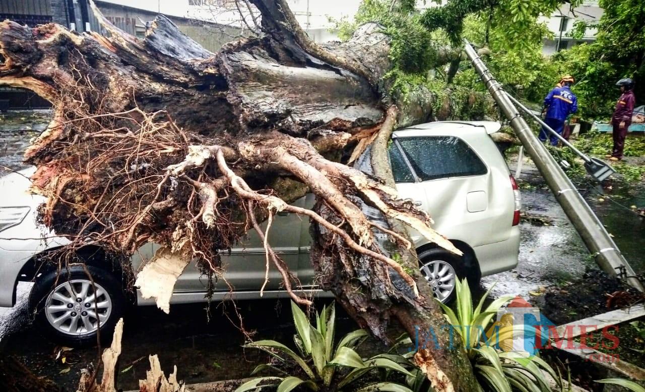 Sebuah mobil tertimpa pohon tumbang di Jalan Kartini, Kota Malang. (Foto: Dokumen MalangTIMES)