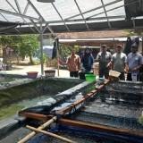 Tim BBPBAT melihat budidaya ikan air tawar di Desa Joho, Wates, Kabupaten Kediri. (eko Arif s /JatimTimes)