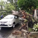 Sebuah mobil tertimpa pohon tumbang saat hujan deras disertai angin kencang yang terjadi di Kota Malang, Selasa (19/2/2019) kemarin (Istimewa)