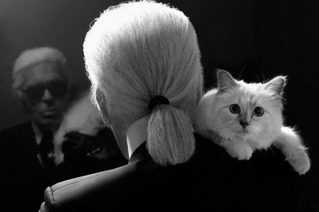 Karl Lagerfeld dan kucing kesayangannya Choupette (Foto: istimewa)