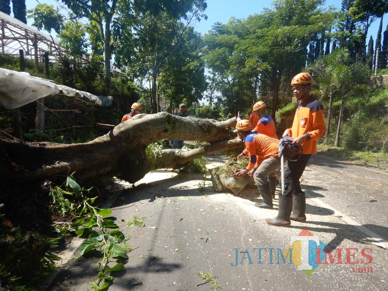 Petugas saat melakukan pemotongan pohon tumbang di Jalan Raya Diponegoro Desa Tulungrejo, Kecamatan Bumiaji, Kota Batu,Sabtu (23/2/2019). (Foto: ist)