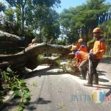 Petugas saat melakukan pemotongan pohon tumbang di Jalan Raya Diponegoro Desa Tulungrejo, Kecamatan Bumiaji, Kota Batu,�Sabtu (23/2/2019). (Foto: ist)