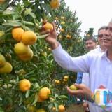 Menteri Pertanian Andi Amran Sulaiman saat memetik jeruk di Kebun Percobaan (KP) Kliran, Desa Bulukerto, Kecamatan Bumiaji, Selasa (17/7/2018). (Foto: Irsya Richa/BatuTIMES)