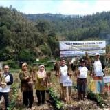 Kewajiban 5 Persen Importir Bawang Putih, Bangkitkan Asa Petani di Kabupaten Malang